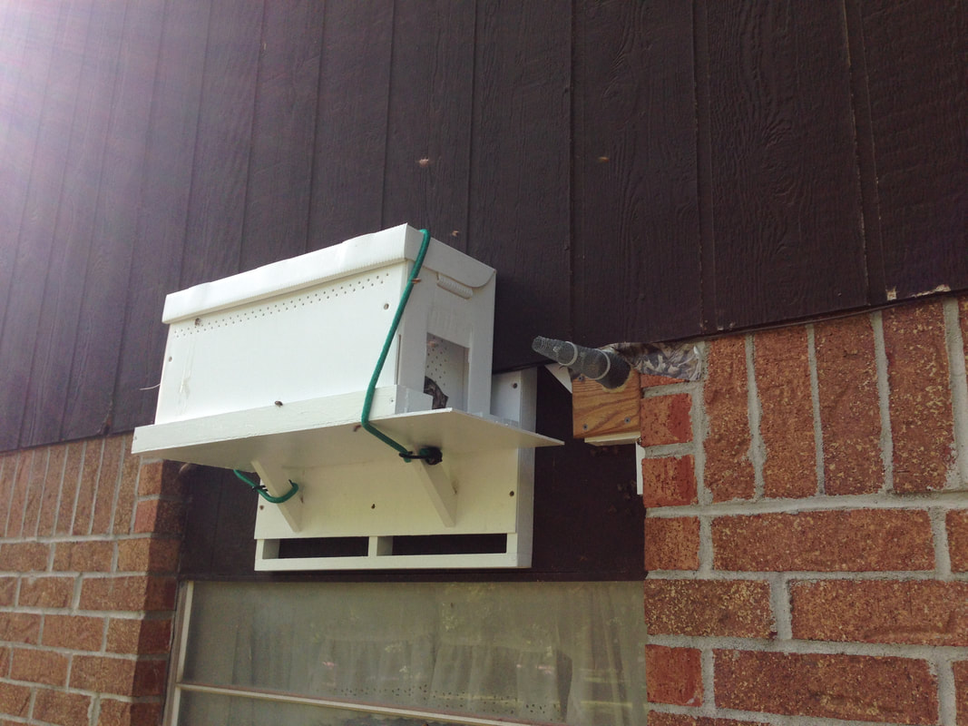 Bee Control and Removal | Serving Oklahoma & Texas | Predator Impact